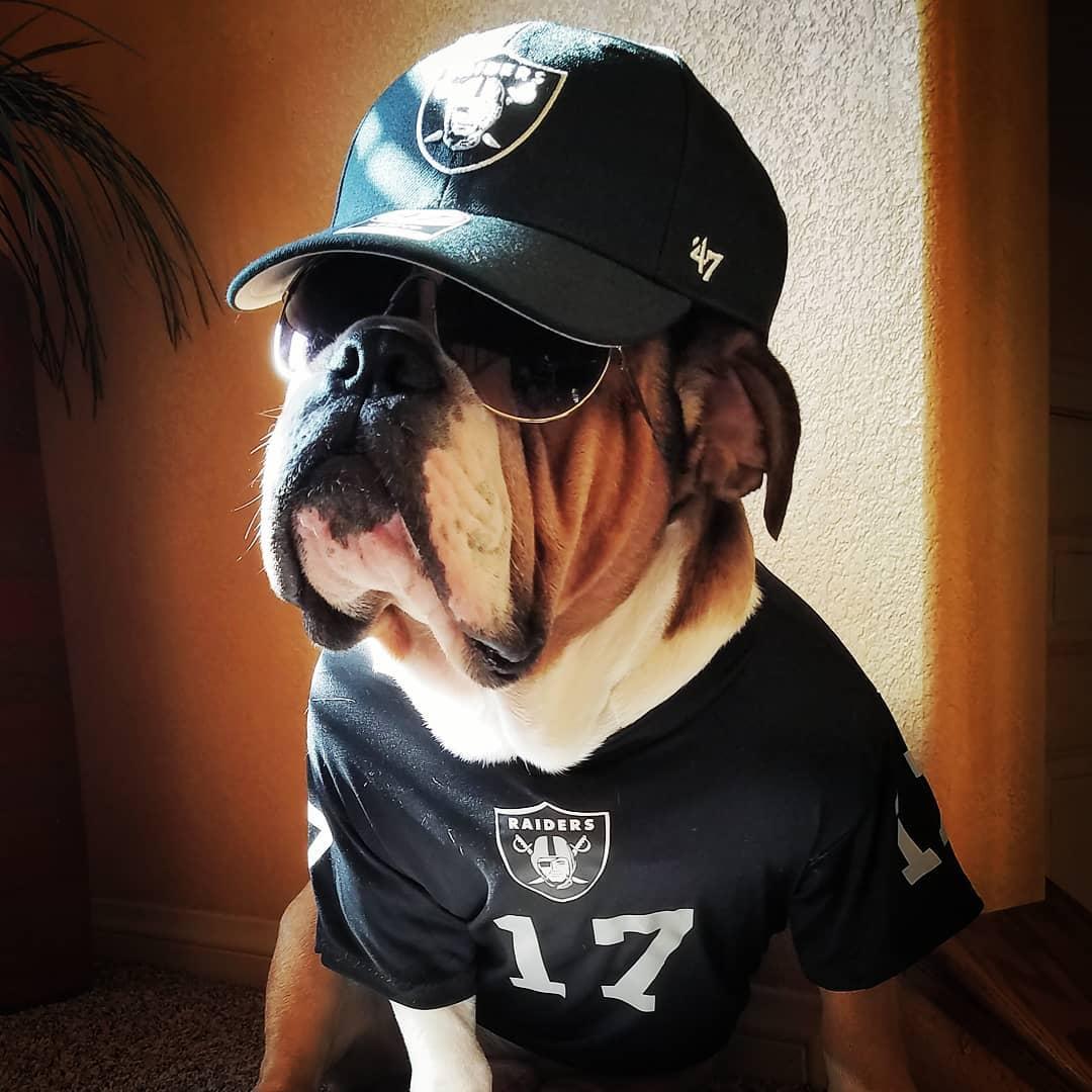 Raider Dog